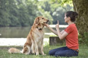 Quick Dog Training Tips from the Best Dog Trainer in Houston
